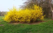 Wiosna w Zamku Międzylesie